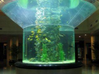 მინა მინის აკვარიუმი ნახევარი ცილინდრიანი perspex წმინდა თევზის სატანკო
