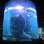 აკრილის ცილინდრიანი დიდი თევზის სატანკო აკვარიუმების ან ოკეანის პარკისთვის