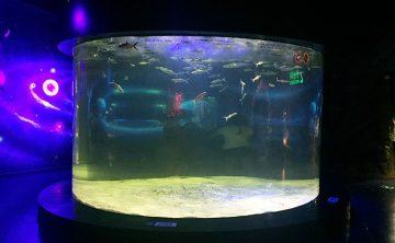 აკრილის თევზის სატანკო