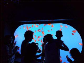 მორგებული სხვადასხვა ზომა ფორმის ჯიშის Jellyfish სატანკო