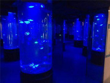 აკრილის jellyfish აკვარიუმი სატანკო მინა